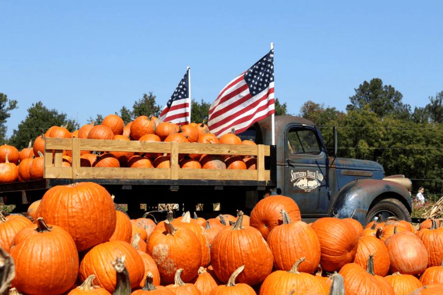 Pumpkin Patch at Southern Belle Farms in McDonough GA
